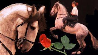Испанская лошадь Андалуз Romano Var и Елена Чистякова /Андалузская порода лошадей /Spanish Horse