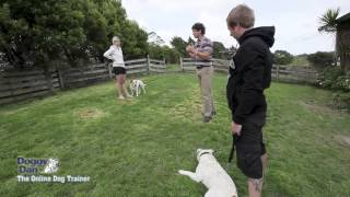 How To Dog Trainers - Doggy Dan's
