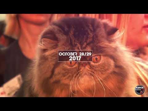 World Cat Show 2017 - Promo