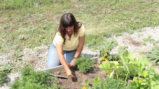 How to Plant Marigolds From Deheaded Blossoms : Marigold Gardening