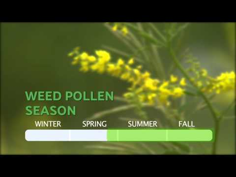 How Long Does Allergy Season last? — From the makers of ZYRTEC®