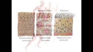 Анатомия. Ткани человека