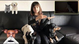 Собака одна дома. Собака скулит и лает.  Как отучить собаку скулить и лаять ?