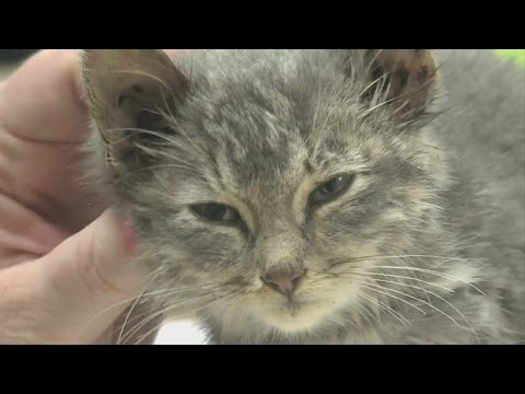 Kitten Safe After Being Stuck In Concrete