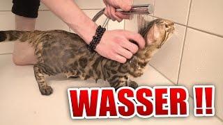 Unsere Katzen rasten aus !