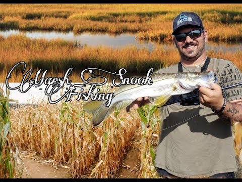 Marsh Snook Fishing Florida