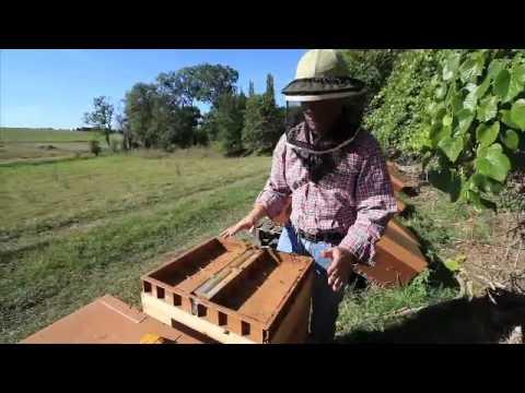 pour ipod 7 8 nourrir une ruche youtube. Black Bedroom Furniture Sets. Home Design Ideas