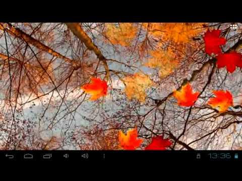 Осенний клен Live Wallpaper   Живые обои для android