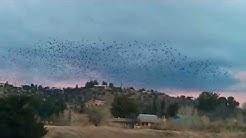 group of birds at Lake Montezuma