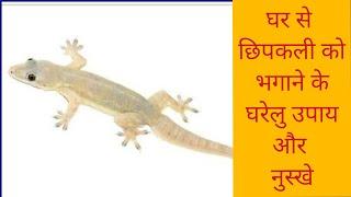 छिपकली भगाने का सटीक और ज़बरदस्त तरीका।How to Get Rid of Lizards Naturally??