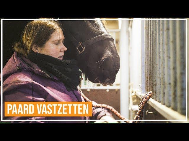 Basis grondwerk: Hoe leer je een paard vaststaan?