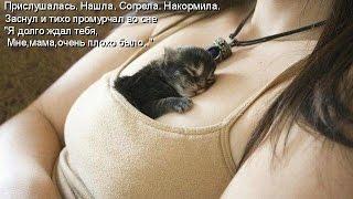 Смешные картинки про кошек и котят Выпуск №36  FUNNY CATS СМЕШНЫЕ КОШКИ