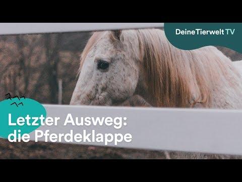 Der letzte Ausweg: Pferdeklappe
