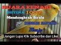 Suara Kenari Betina Untuk Mendongkrak Kenari Jantan Agar Mau Bunyi Chickens Of The Female Canary  Mp3 - Mp4 Download