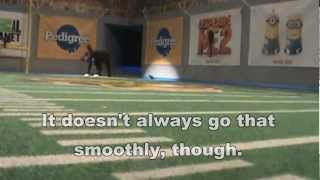 Puppy Bowl: Behind The Scenes