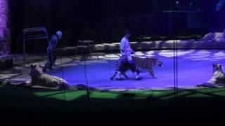 Шоу Запашных Хозяйка Мертвого озера  -  Тигры и лев
