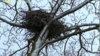 El Águila americana - Documental Parte 1/4 HD