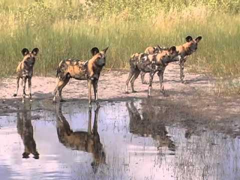 Discover Africa on Safari