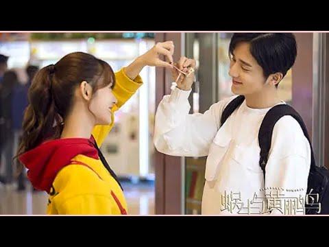 Тайно влюблена в друга пианиста 💗Клип к дораме:Симфония романтики (2020)💞Wo Niu Yu Huang Li Niao
