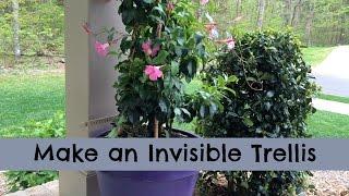 Make an Invisible Trellis for a Climbing Plant