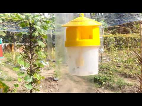 Home Made Insect Trap : Pheromone Trap