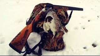 Охота на серую куропатку: самые яркие моменты