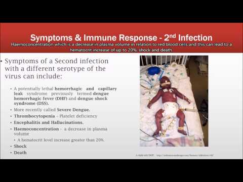 Dengue Virus: a brief introduction