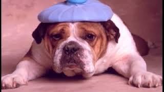 Que de está por meu inchando cachorro olho