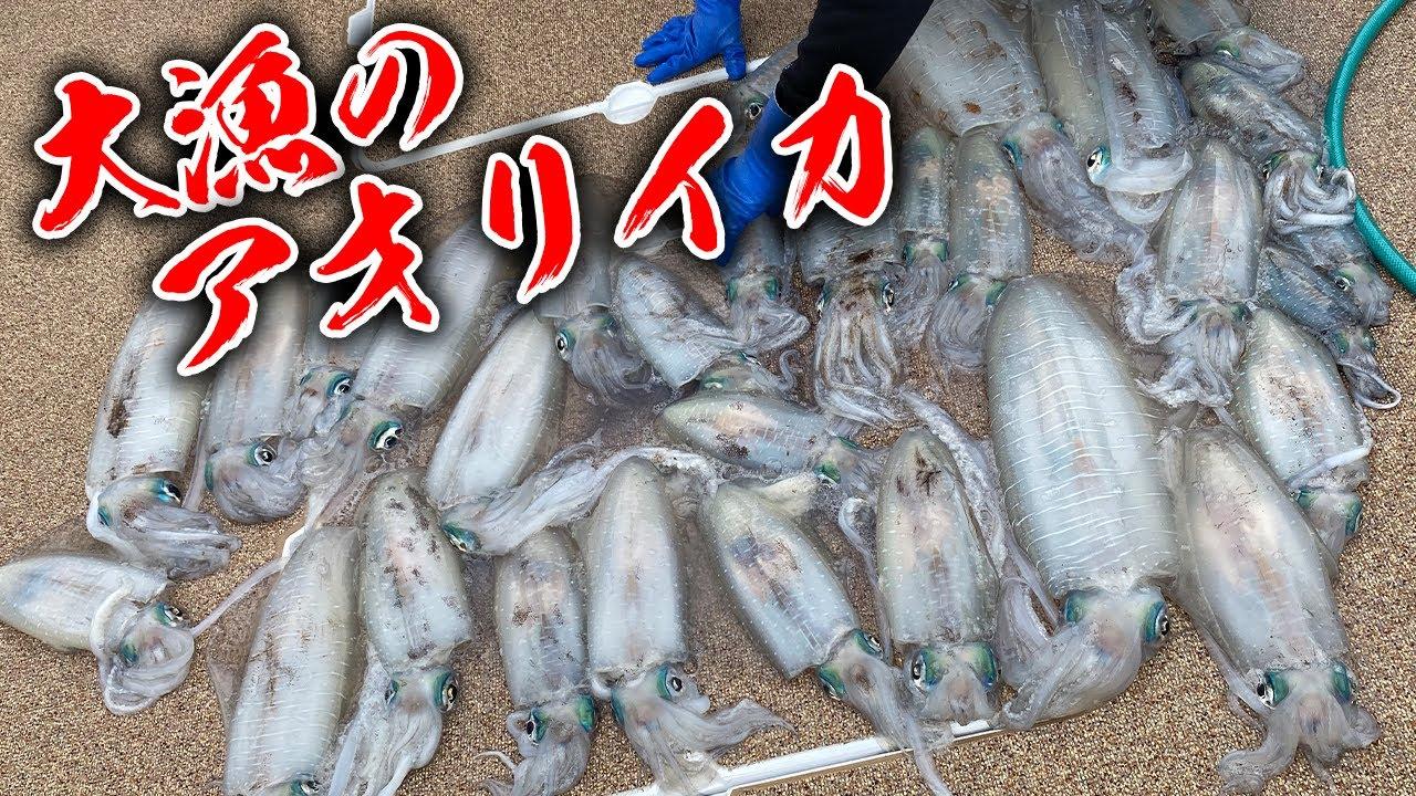 #2 アオリイカ釣りの釣果が凄すぎ
