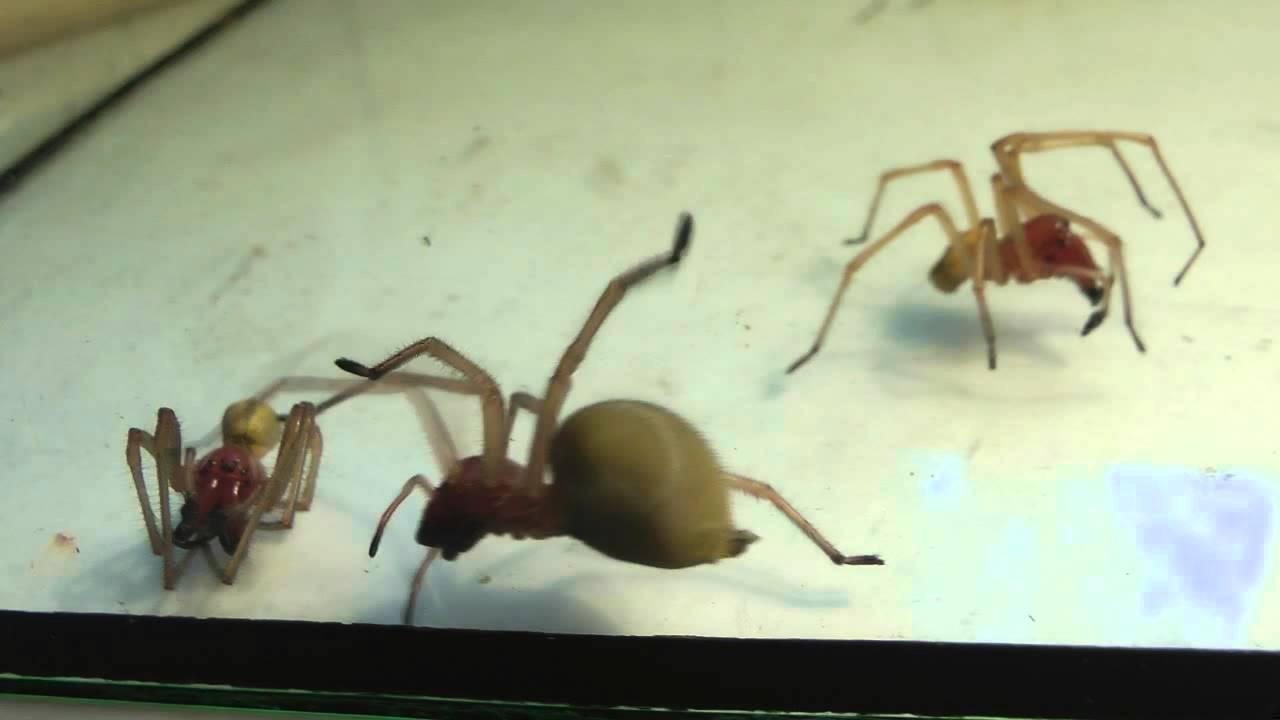Ядовитые пауки в Воронежской области - YouTube