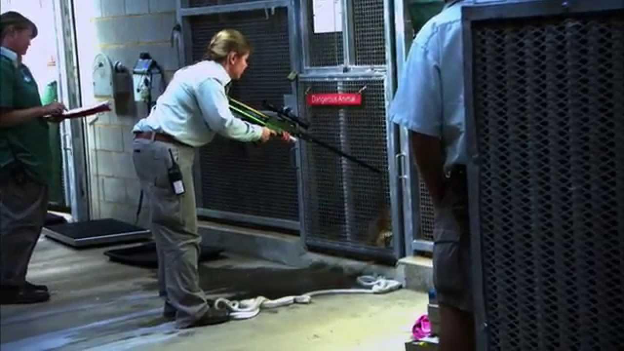 Download Wild Life at the Zoo Season 2 Episode 2 - Koala Joey & Lazarus the lion