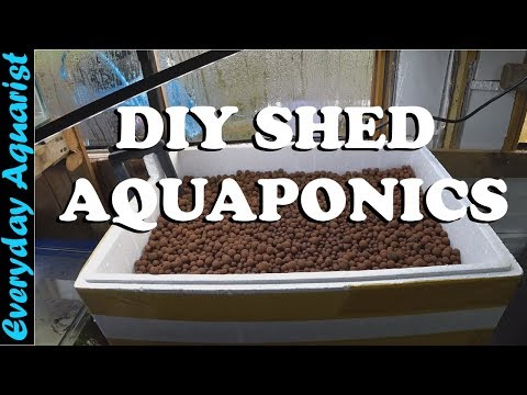 DIY Shed Aquaponics Experiment: Setting up the basics