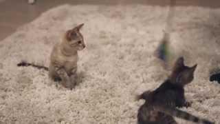 Lustige Katzen ohne Taucheranzüge