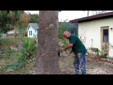 Elvis Tree Climber
