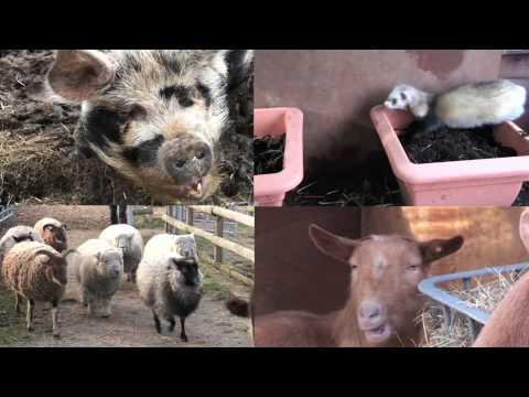 Amazing Animals at Spitalfields City Farm, London