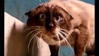 Кот ведёт себя очень странно...
