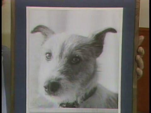 Bert the Dog on Late Night, September 12, 1983
