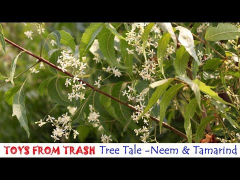 Tamarind Tree Meaning In Hindi