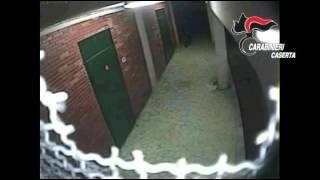 Il video della gang di ladri in azione
