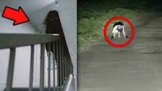 5 Penampakan hantu paling mengerikan dan menakutkan yang terekam kamera