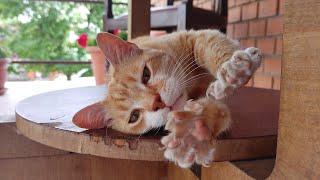 Cat's Lazy Day (Mini Movie)