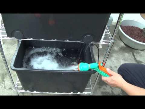 魚菜共生 祕訣大公開 aquaponics hydroponic 專業手法穩定性高 非寶特瓶利用 看完一定會做 詳細解說喔