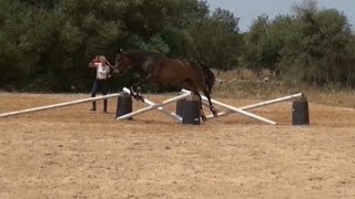 jumping on the lunge young horse single fence