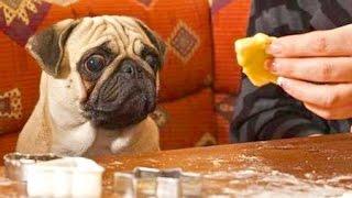 Отучивание собаки от попрошайничества. Собака - друг человека. Воспитание без насилия.
