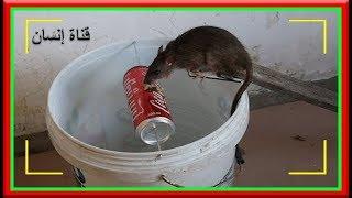 أفضل حل للقضاء على الفئران | أصنع بنفسك فخ للفئران بأستخدام CoCa CoLa Cans أفضل من أي وقت مضى
