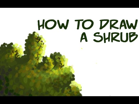 Bush Drawing Easy