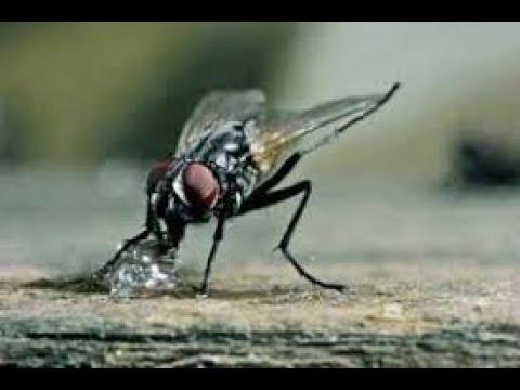 Evo Foam Pest Control Company Austin, TX - Fly Treatment