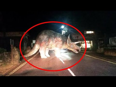 10 Dinosaurs Caught on Camera in Real Life