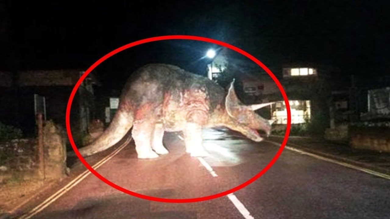 10 Dinosaurs Caught On Camera In Real Life Youtube