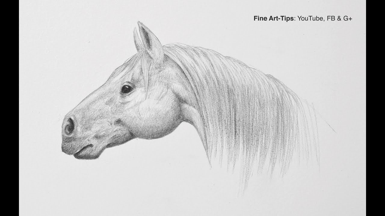 Horse Head Pencil Easy Beginner Horse Drawing